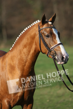 Can Dance von FS Champion de Luxe